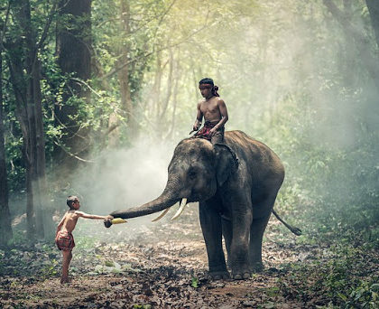 Elephant en Birmanie