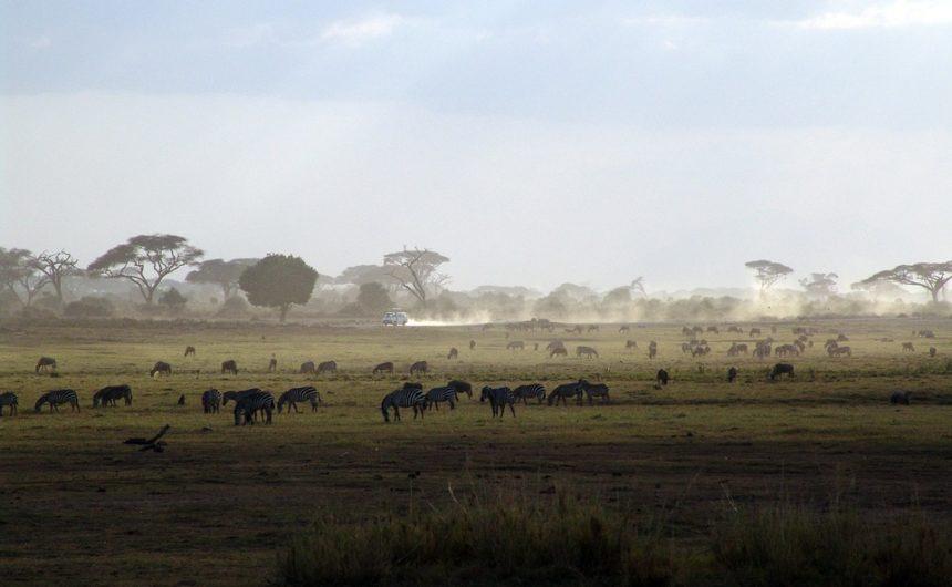 Le Kenya : pays des safaris